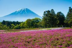 Mt 富士和Shibazakura 免版税库存照片