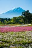 Mt 富士和Shibazakura 免版税库存图片