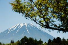 Mt 富士通过森林和蓝天 库存图片