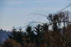 Mt 敞篷在俄勒冈 库存照片