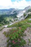 Mt.更加多雨的国家公园 库存照片
