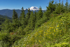 Mt 有绿色植被的更加多雨的华盛顿州公园 库存照片