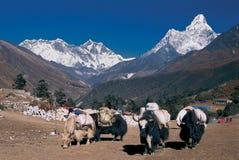Mt 珠穆琅玛、Nuptse、洛子峰& Amadablam,珠穆琅玛地区, Solukhumbu,尼泊尔 库存图片