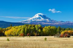 Mt Adams and aspen trees in the fall. Mt Adams and aspen trees in autumn and a grazing field royalty free stock images