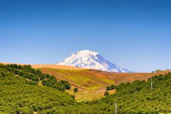 Mt. Adams seen from Dufur Oregon. Mt. Adams, of the Cascade Range, rises above the hillside dotted with orchard trees near Dufur, Oregon stock photo