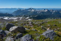 Mt Adams Looms Behind Wildflower Covered Moutains. In Washington wilderness royalty free stock photo