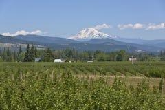 Mt Adams- und Hood River-Tal Oregon Stockfoto