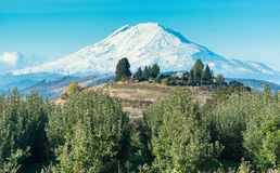 Mt. Adams, Washington, as seen from Hood River, OR Royalty Free Stock Photos