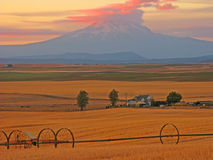 Mt Adams Wheat Country. An image near Goldendale, Wa of the harvested wheat field with Mt Adams in background Stock Photography