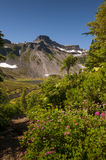 Mt. Baker National Forest Royalty Free Stock Photos