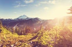 Mt Baker Royalty Free Stock Photo