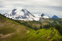 Mt. Baker, Washington, USA. The wildflowers along the Skyline Divide trail are spectacular during the month of August. Mt. Baker is located in the Pacific Stock Image