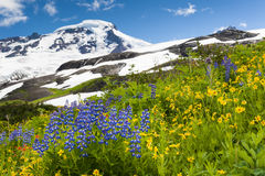 Mt. Baker Wildflowers stock photos