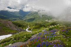 Mt. Baker Wildflowers Royalty Free Stock Images