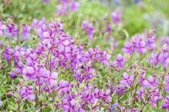 Mt. Baker Wildflowers Stock Photos