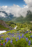 Mt. Baker Wildflowers Stock Image