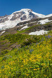 Mt. Baker Wildflowers royalty free stock image