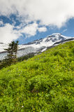 Mt. Baker Wildflowers Royalty Free Stock Photography