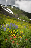 Mt. Baker Wildflowers. Indian Paintbrush, Yellow Aster, and blue Lupine, are just some of the wildflowers that carpet the area around Mt. Baker, Washington Royalty Free Stock Photo