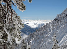Mt. Baldy California Winter. Ice covered trees and deep snow on top of Mt. Baldy in Southern California Stock Image