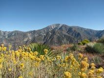 Mt Baldy do pico do por do sol Imagem de Stock