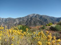 Mt Baldy from Sunset Peak. Mt. Baldy viewed from nearby Sunset Peak, in the Angeles National Forest near L.A Stock Image