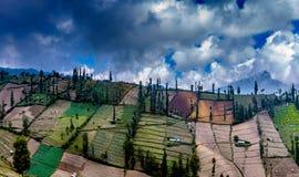 Mt Bromo领域,玛琅,东爪哇省 免版税库存图片