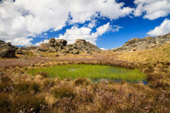 Mt Buffalo Wetland Royalty Free Stock Photo