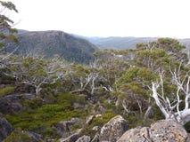 Mt Campo Forrest alpino Fotografie Stock Libere da Diritti