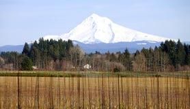 Mt. Cappuccio in inverno, condizione dell'Oregon. Fotografia Stock Libera da Diritti