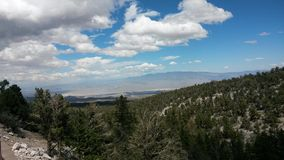 MT. Chareston. Views of forest from mount charleston in las vegas Royalty Free Stock Image