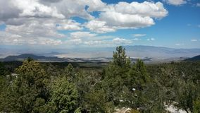 MT. Chareston. Views of forest from mount charleston in las vegas Stock Photo