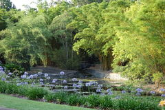 MT Coo-Tha Botanische tuin Stock Foto's