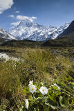 Mt Cook with Lily or Buttercups, National Park, New Zealand Royalty Free Stock Photo