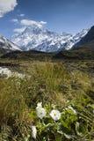 MT Cook met Lelie of Boterbloemen, Nationaal Park, Nieuw Zeeland Royalty-vrije Stock Foto
