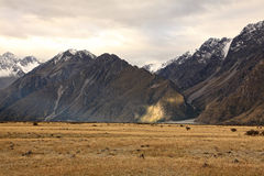 Mt. Cook,South Island New Zealand. Royalty Free Stock Images
