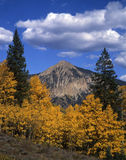 Mt. Crested Butte. And aspen trees during the autumn season in the Gunnison National Forest of Colorado Stock Images