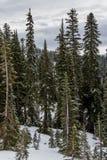 Mt Dżdżyści uroczyści wiecznozieloni drzewa fotografia royalty free