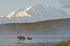 Mt denali sunrise Royalty Free Stock Photos