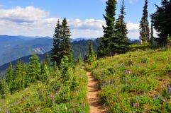 Mt Des wildflowers plus pluvieux photo stock