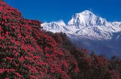MT Dhaulagiri van Poon Hill, Ghorepani, Nepal Stock Afbeelding
