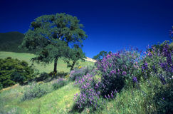 Mt. Diablo springtime Royalty Free Stock Photos