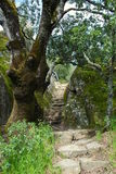 Mt Diablo Trail Royalty Free Stock Photos