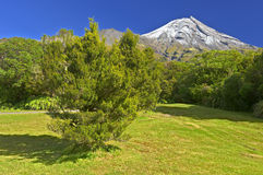 Mt Egmond. National Park, North Island, New Zealand stock image