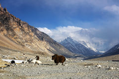 Mt. Everest and flannelette temple Stock Photography