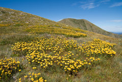 Mt Feathertop fotografia stock libera da diritti