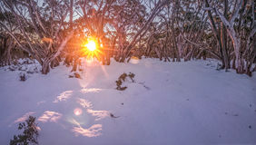 Mt Feathertop - Australie Photo libre de droits