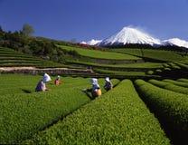 Mt,fuji-165 Stock Image