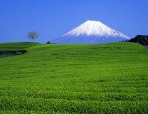 Mt,fuji-208 Stock Images