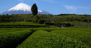 Mt. Fuji Royalty Free Stock Photos